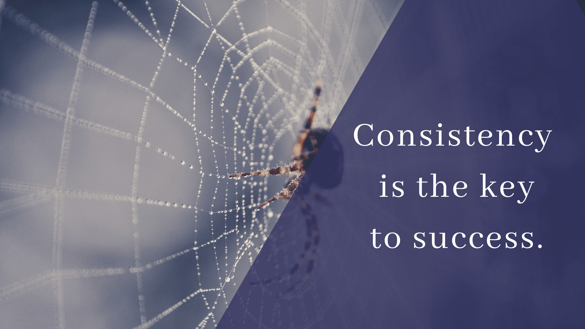 consistency-is-key-to-gaining-success-in-seo